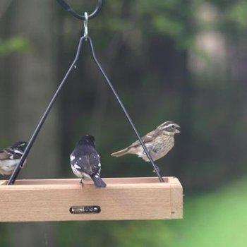 """- BIRDS CHOICE 17""""X14"""" CEDAR HANGING TRAY FEEDER"""