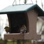 - BIRDS CHOICE 1.5 QT. HOPPER FEEDER RECYCLED