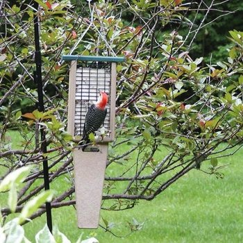 - BIRDS CHOICE RECYCLED 2 SUET FDR W/TAIL PROP