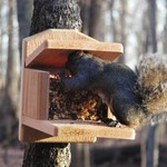 - BIRDS CHOICE CEDAR SQUIRREL MUNCH BOX