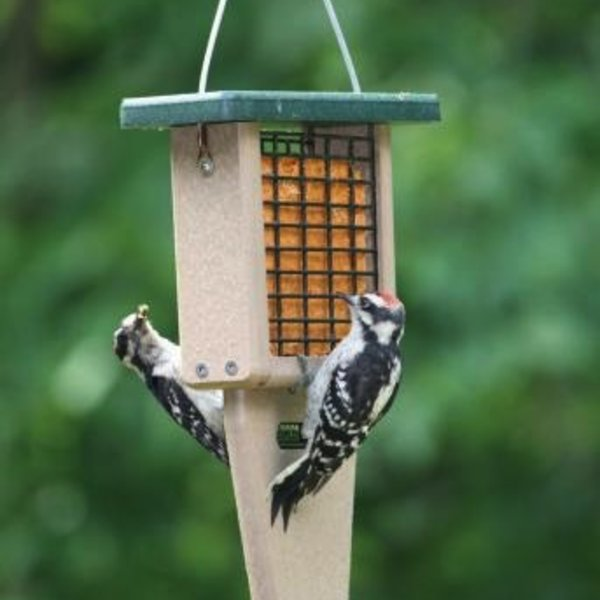 - BIRDS CHOICE RECYCLED TAIL PROP SUET FEEDER