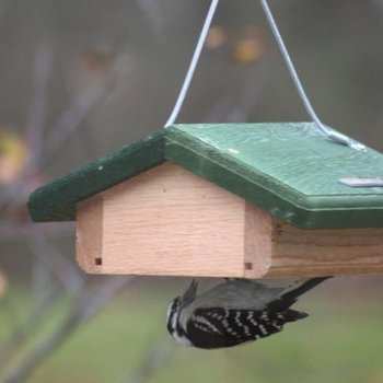 - BIRDS CHOICE CEDAR UPSIDE DOWN SINGLE SUET FDR