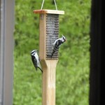 - BIRDS CHOICE CEDAR DOUBLE SUET FEEDER W/TAIL PROP