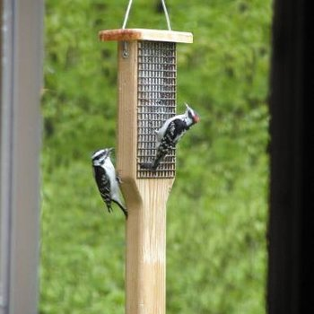 - BIRDS CHOICE CEDAR DBL SUET FDR W/TAIL PROP