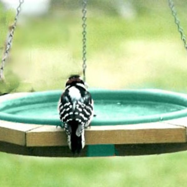 - SONGBIRD ESSENTIALS MINI HANGING BIRDBATH GREEN