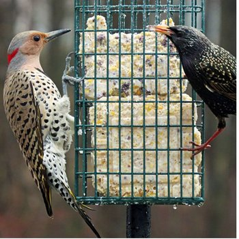 - DROLL YANKEES DOUBLE SUET FDR W/POLE CLAMP