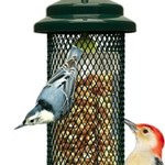 - BROME SQUIRREL BUSTER PEANUT FEEDER