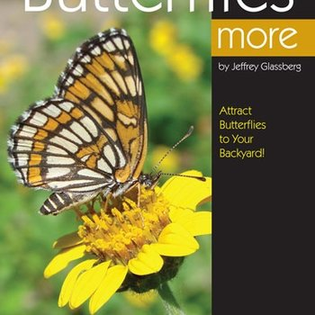 - BWD: ENJOYING BUTTERFLIES MORE
