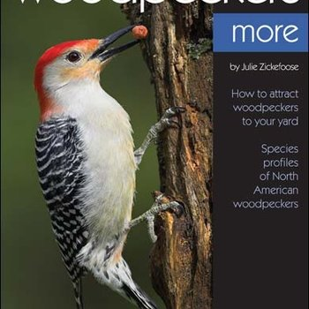 - BWD: ENJOYING WOODPECKERS MORE