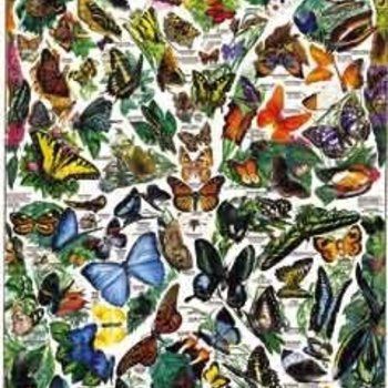 - WHITE MOUNTAIN BUTTERFLIES OF THE WORLD PUZZLE 1000PC Discontinued