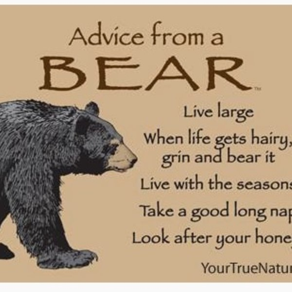 -ADVICE FROM A BEAR MAGNET