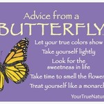 -ADVICE FROM A BUTTERFLY MAGNET
