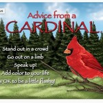 -ADVICE FROM A CARDINAL MAGNET