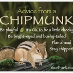 -ADVICE FROM A CHIPMUNK MAGNET