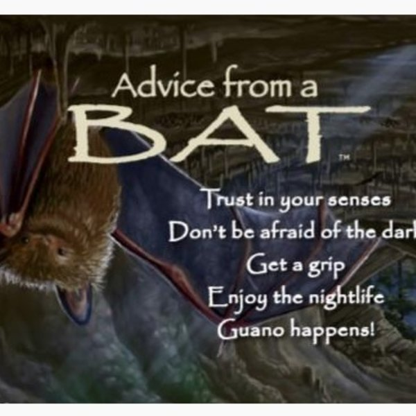 -ADVICE FROM A BAT MAGNET