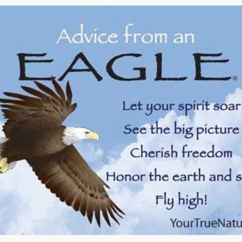-ADVICE FROM A EAGLE MAGNET