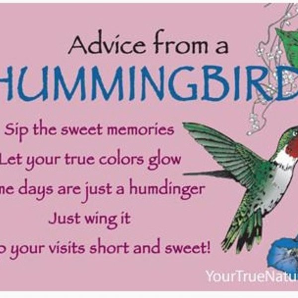 -ADVICE FROM A HUMMINGBIRD MAGNET