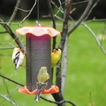 - BIRDS CHOICE 1 Qt THISTLE/NYJER FEEDER ORANGE