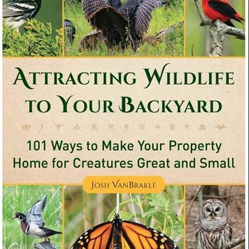 - ATTRACTING WILDLIFE TO YOUR BACKYARD....