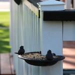 - ABBOTT CAST IRON CORNER BIRD BATH/FEEDER