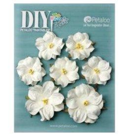 Petaloo Ploo white roses