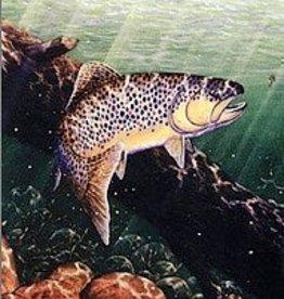 Shook Book Publishing Eagle River & Gore Creek Fishing Map & Floater's Guide