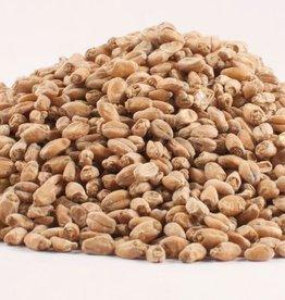 Grain 18661