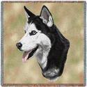 """54"""" Lap Square Siberian Husky"""