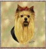 "54"" Lap Square Yorkshire Terrier"