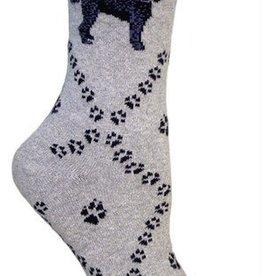 Labradoodle on Gray Socks