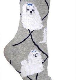 Maltese on Gray Socks