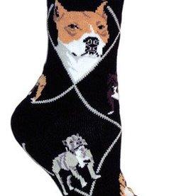 Pit Bull on Gray Socks