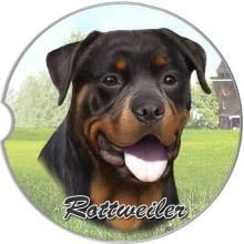 Absorbent Car Coaster - Rottweiler