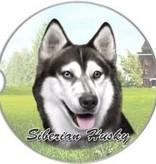 Absorbent Car Coaster - Siberian Husky
