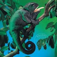 Folkmanis Folkmanis Chameleon Puppet