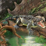 Folkmanis Folkmanis American Alligator Puppet