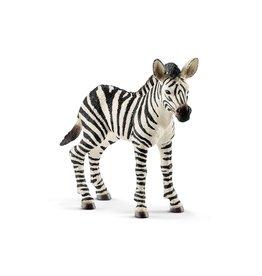 Schleich Zebra foal (14811)