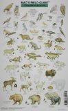 Mac's Alaskan Wildlife - The Mountaineers