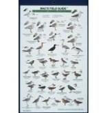 Mac's NW Coastal Water Birds - The Mountaineers