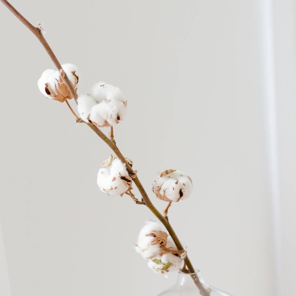 Fleur de Coton - Tige