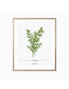 Joannie Houle Eucalyptus Botanical Poster