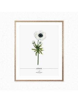 Joannie Houle Affiche Botanique Anémone