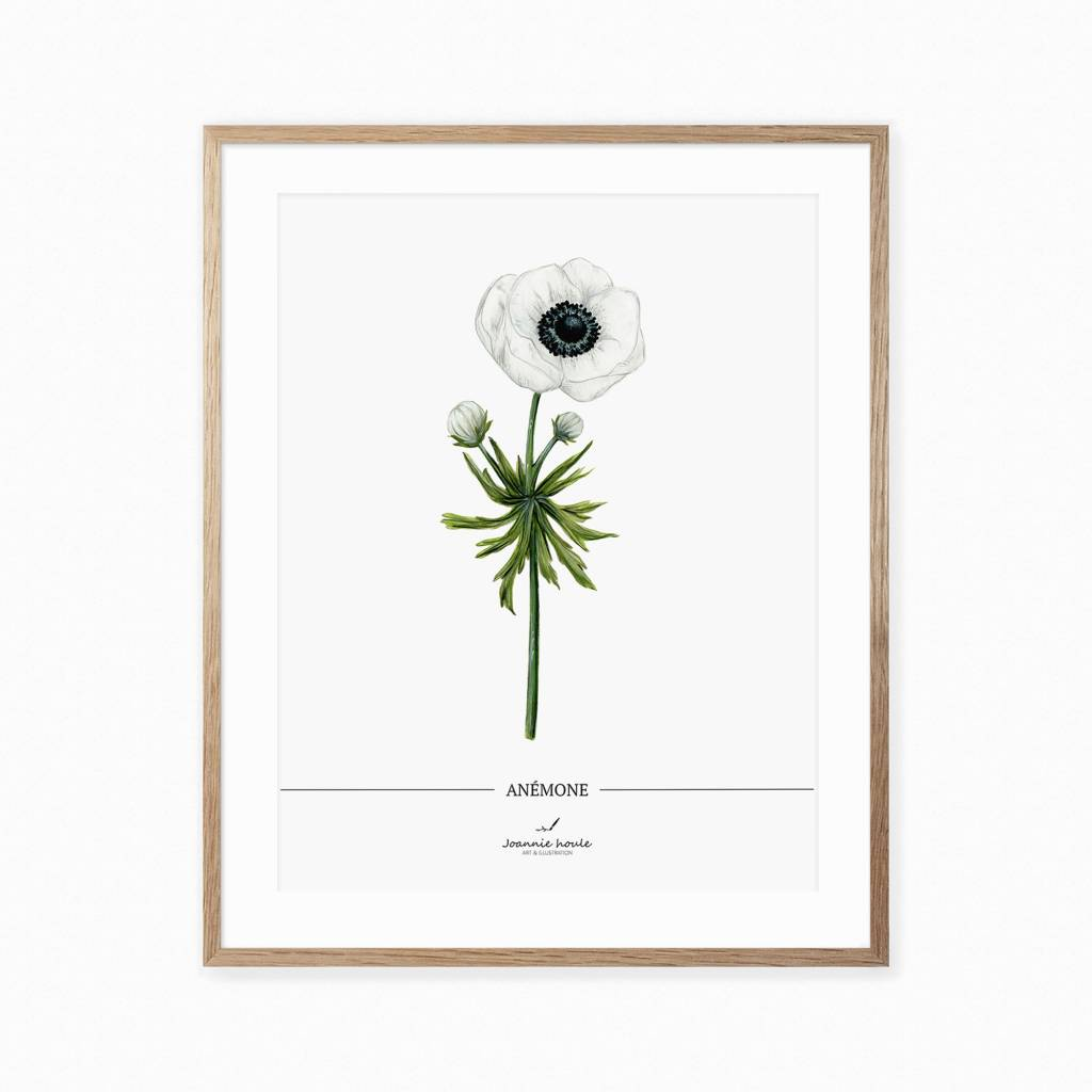 Joannie Houle Anemone Botanical Poster