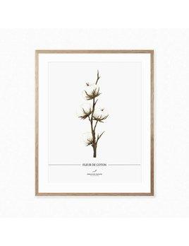 Joannie Houle Affiche Fleur De Coton