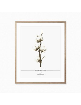Joannie Houle Cotton Flower Poster