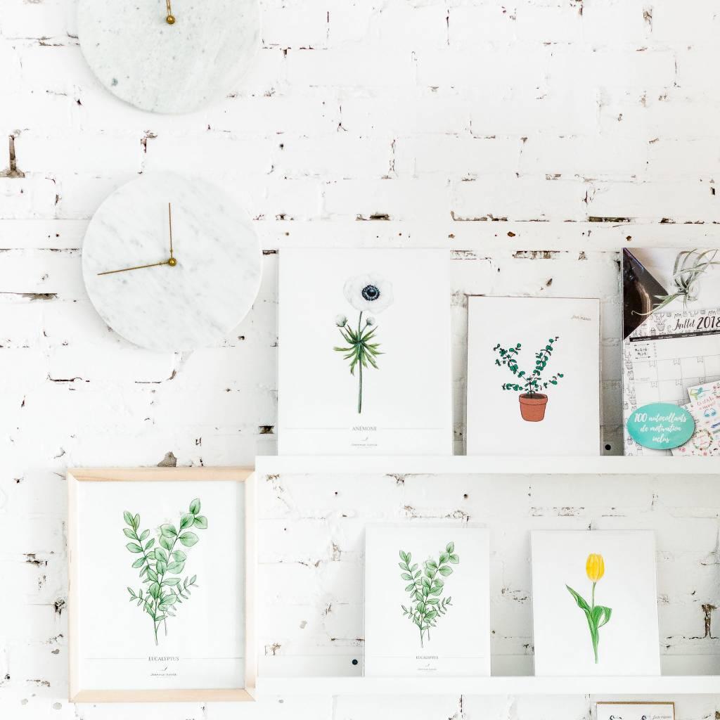 Joannie Houle Affiche Botanique Eucalyptus