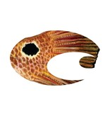 Costa Decal Costa Logo AM Redfish-Retail Pack
