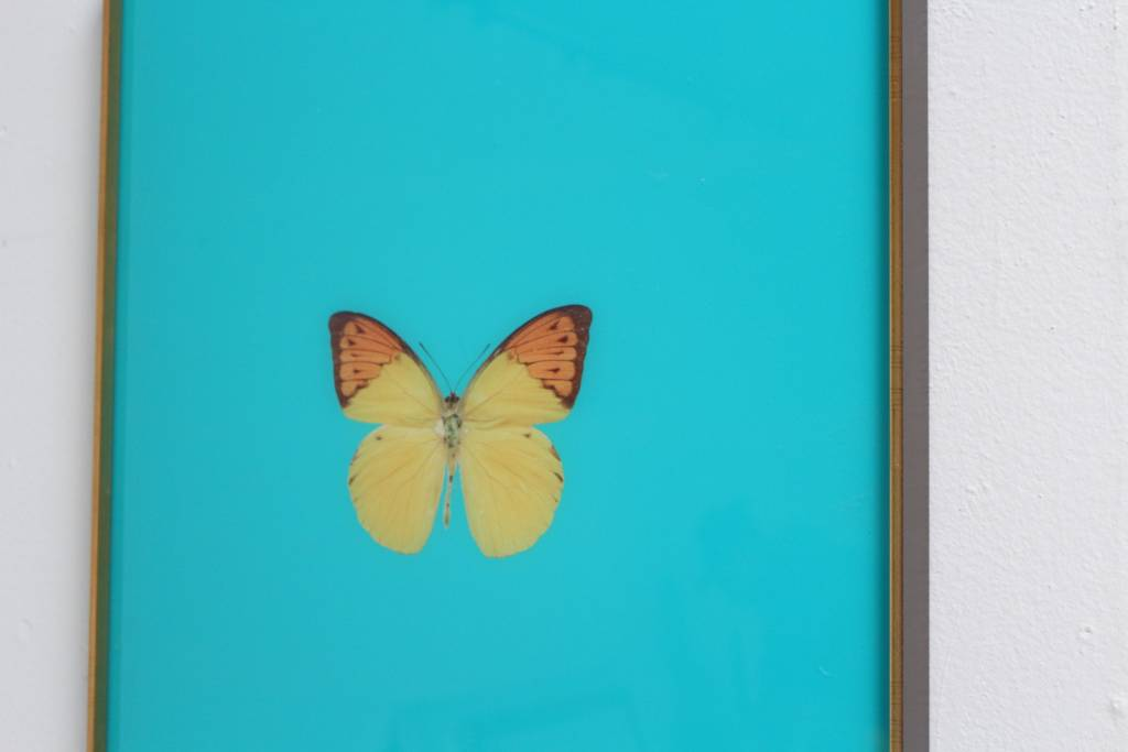 FRAMED BUTTERFLY PRINT IN TURQUOISE - Scout Design Studio