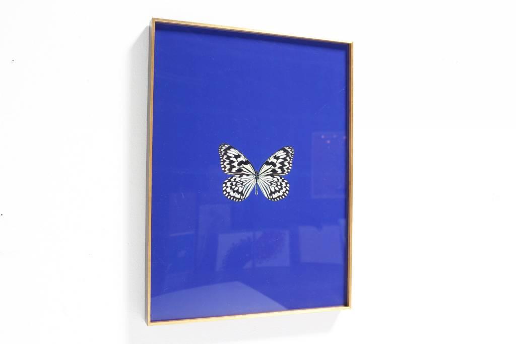 FRAMED BUTTERFLY PRINT - Mazarine Blue - Scout Design Studio