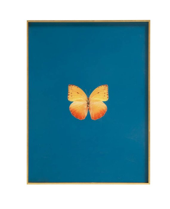 FRAMED BUTTERFLY PRINT - PEACOCK GREEN